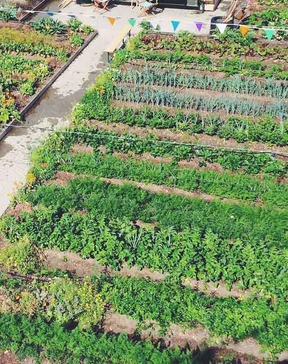 เกษตรอินทรีย์แตกต่างอย่างไร
