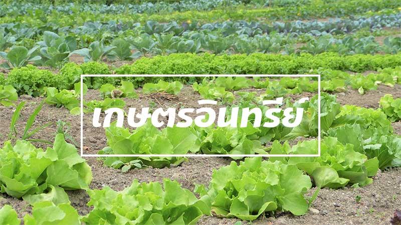 ความปลอดภัยของเกษตรแบบอินทรีย์