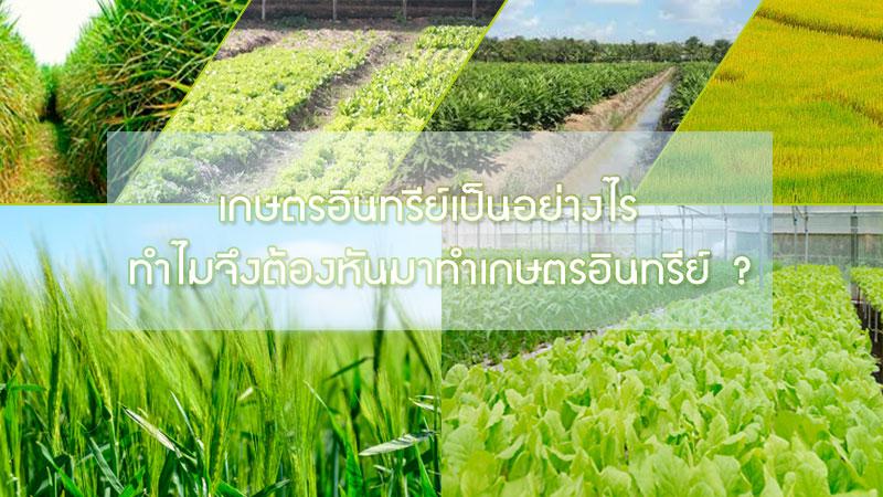 เกษตรอินทรีย์เป็นอย่างไร